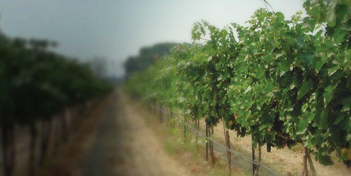 Gordon Estate - Wine | Total Wine & More