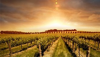 Guide to Australian Wines